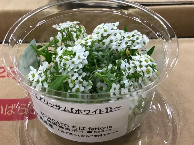 アリッサムの花